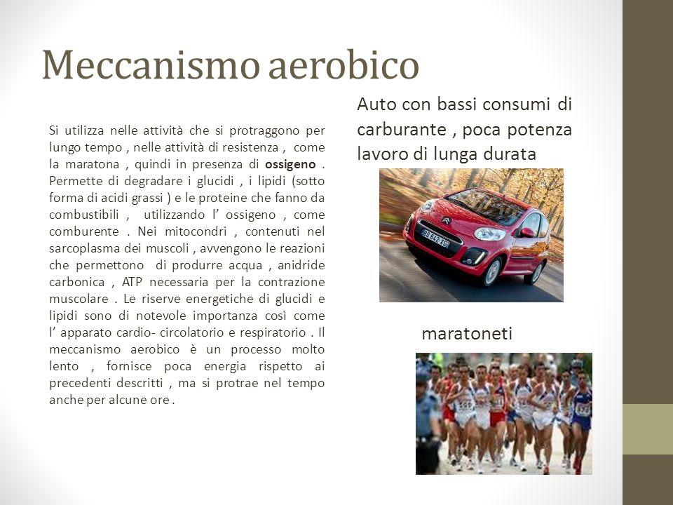 Meccanismo aerobico Auto con bassi consumi di carburante , poca potenza lavoro di lunga durata.