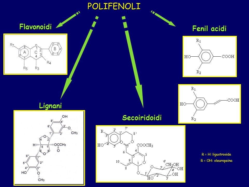 POLIFENOLI Flavonoidi Fenil acidi Lignani Secoiridoidi 12