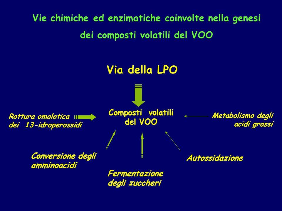 Via della LPO Vie chimiche ed enzimatiche coinvolte nella genesi