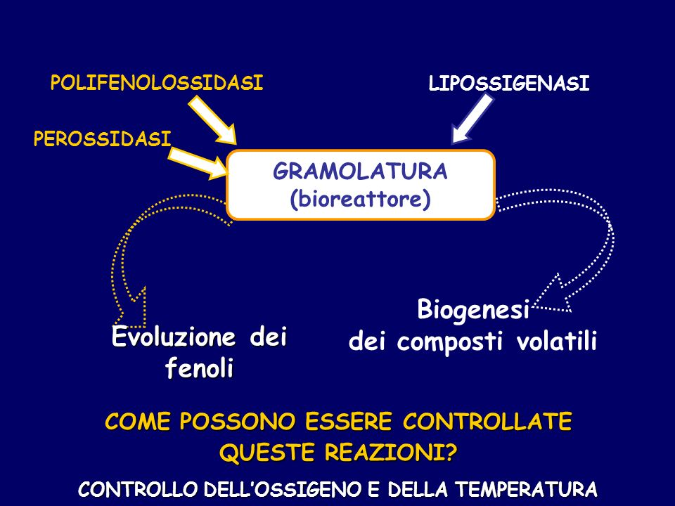 Biogenesi dei composti volatili Evoluzione dei fenoli