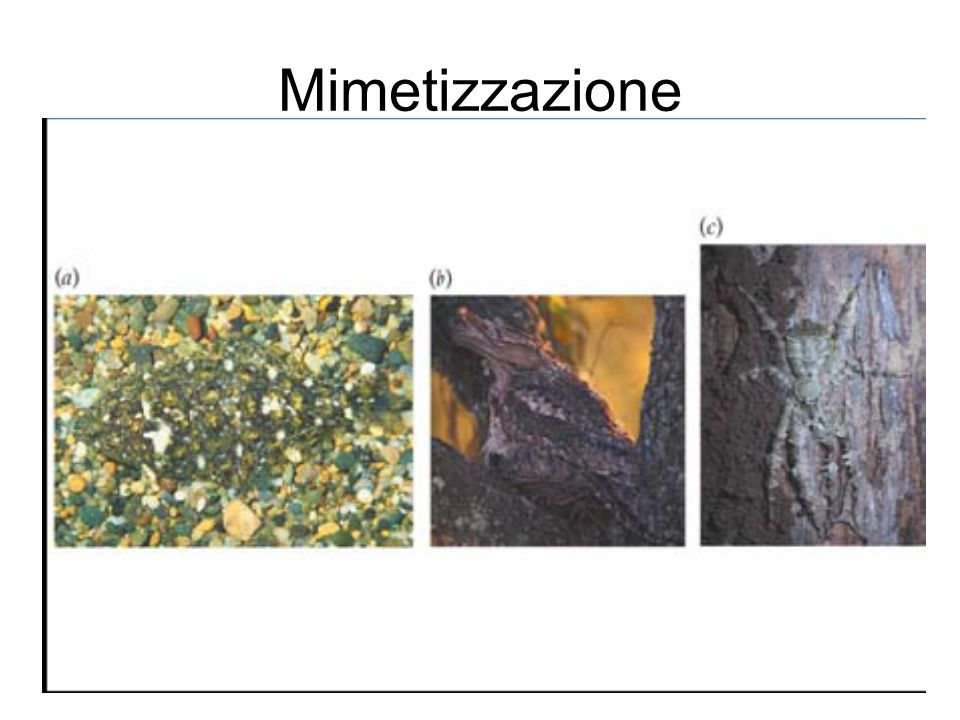 Mimetizzazione