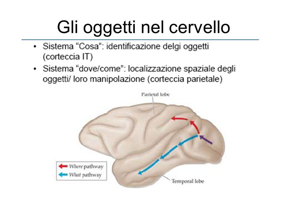 Gli oggetti nel cervello