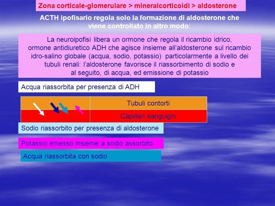 Zona corticale-glomerulare > mineralcorticoidi > aldosterone