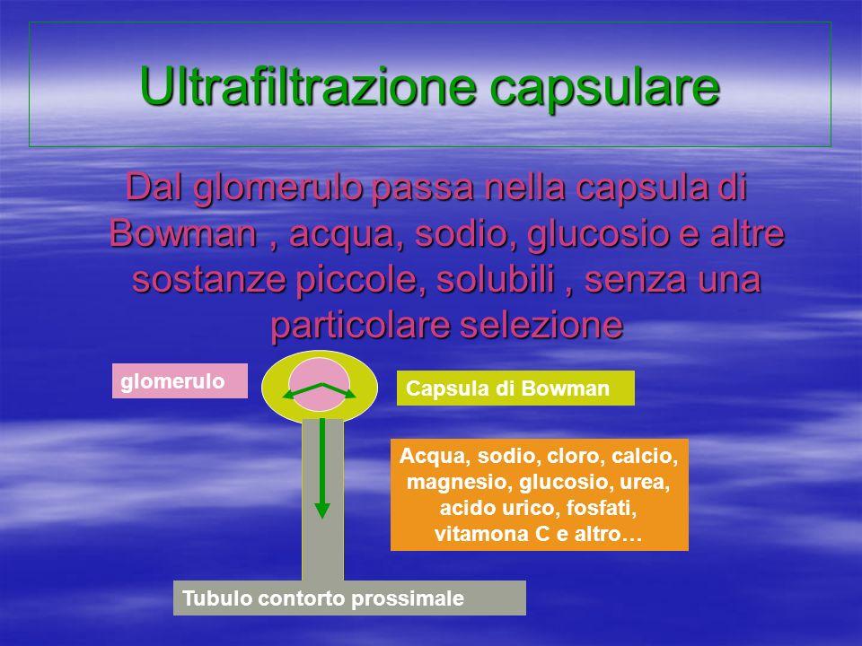 Ultrafiltrazione capsulare