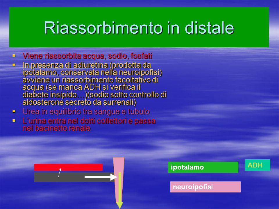 Riassorbimento in distale