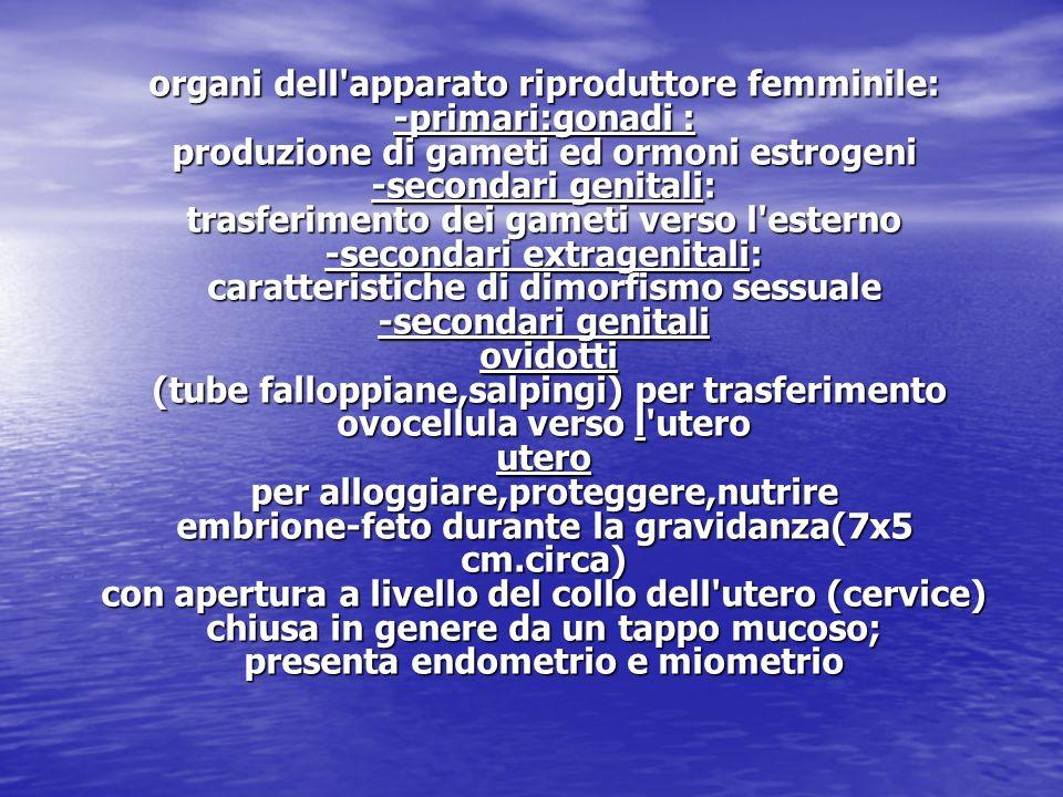 organi dell apparato riproduttore femminile: -primari:gonadi : produzione di gameti ed ormoni estrogeni -secondari genitali: trasferimento dei gameti verso l esterno -secondari extragenitali: caratteristiche di dimorfismo sessuale -secondari genitali ovidotti (tube falloppiane,salpingi) per trasferimento ovocellula verso l utero utero per alloggiare,proteggere,nutrire embrione-feto durante la gravidanza(7x5 cm.circa) con apertura a livello del collo dell utero (cervice) chiusa in genere da un tappo mucoso; presenta endometrio e miometrio