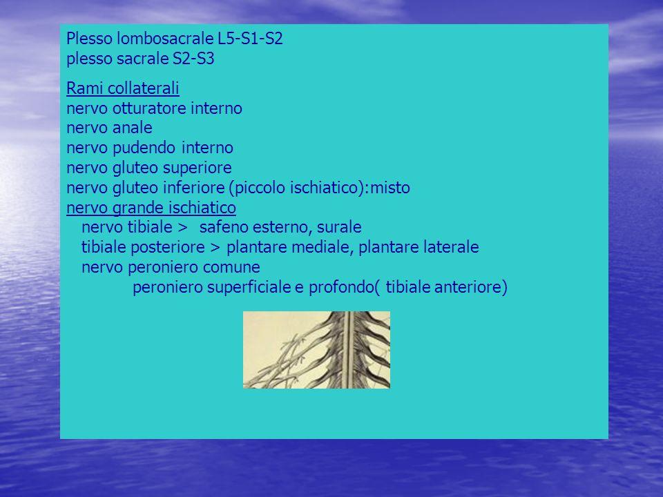 Plesso lombosacrale L5-S1-S2 plesso sacrale S2-S3