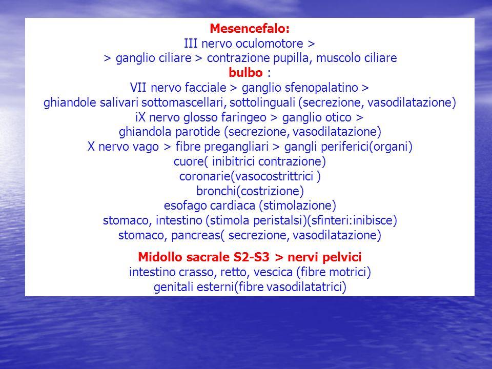 Mesencefalo: III nervo oculomotore > > ganglio ciliare > contrazione pupilla, muscolo ciliare bulbo : VII nervo facciale > ganglio sfenopalatino > ghiandole salivari sottomascellari, sottolinguali (secrezione, vasodilatazione) iX nervo glosso faringeo > ganglio otico > ghiandola parotide (secrezione, vasodilatazione) X nervo vago > fibre pregangliari > gangli periferici(organi) cuore( inibitrici contrazione) coronarie(vasocostrittrici ) bronchi(costrizione) esofago cardiaca (stimolazione) stomaco, intestino (stimola peristalsi)(sfinteri:inibisce) stomaco, pancreas( secrezione, vasodilatazione)
