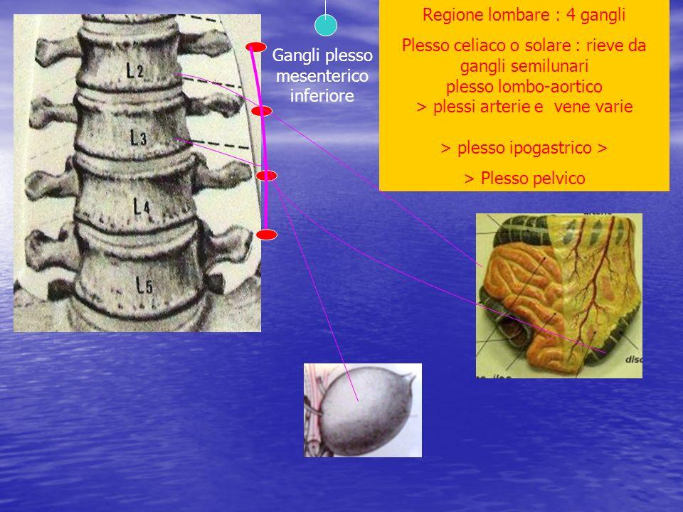 Regione lombare : 4 gangli