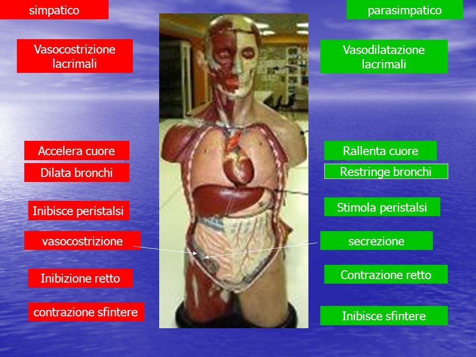 Vasocostrizione lacrimali Vasodilatazione lacrimali