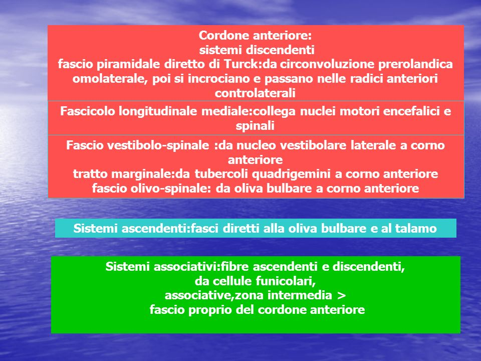 Sistemi ascendenti:fasci diretti alla oliva bulbare e al talamo