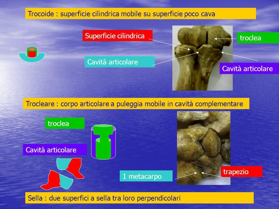 Trocoide : superficie cilindrica mobile su superficie poco cava