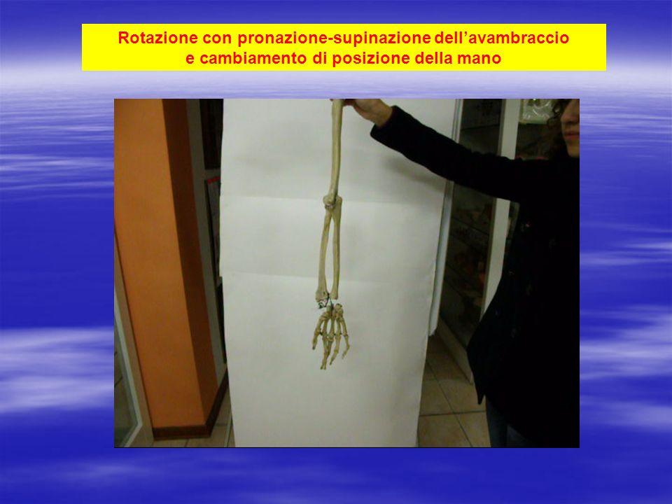 Rotazione con pronazione-supinazione dell'avambraccio e cambiamento di posizione della mano