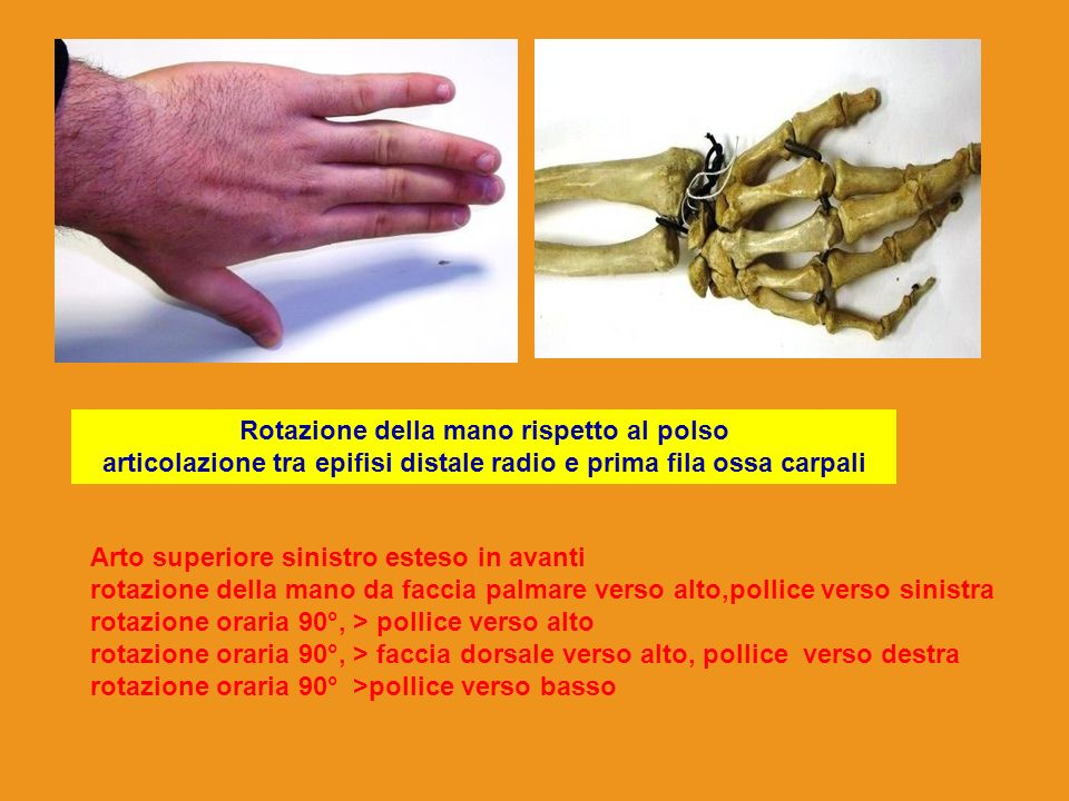Rotazione della mano rispetto al polso articolazione tra epifisi distale radio e prima fila ossa carpali