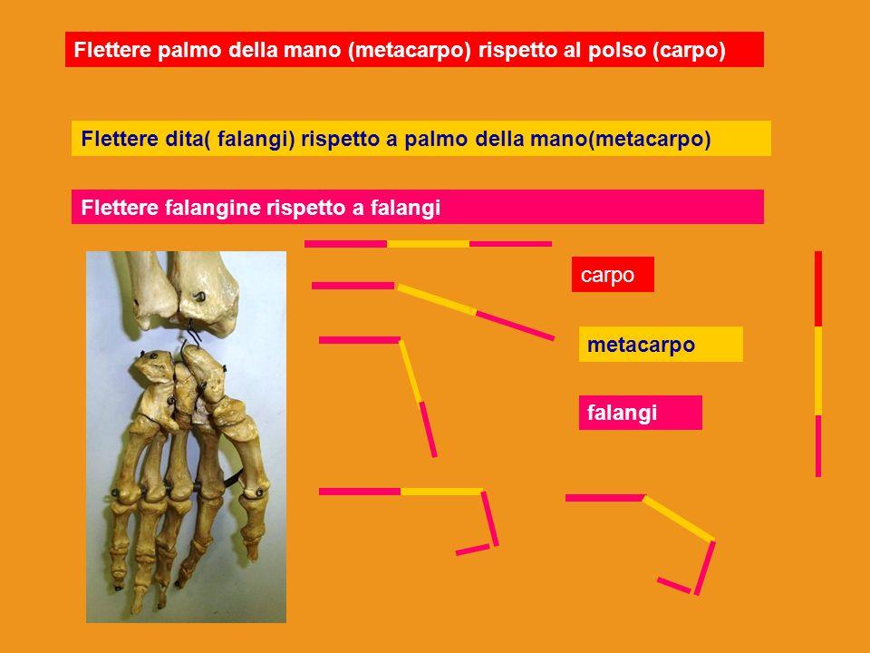 Flettere palmo della mano (metacarpo) rispetto al polso (carpo)