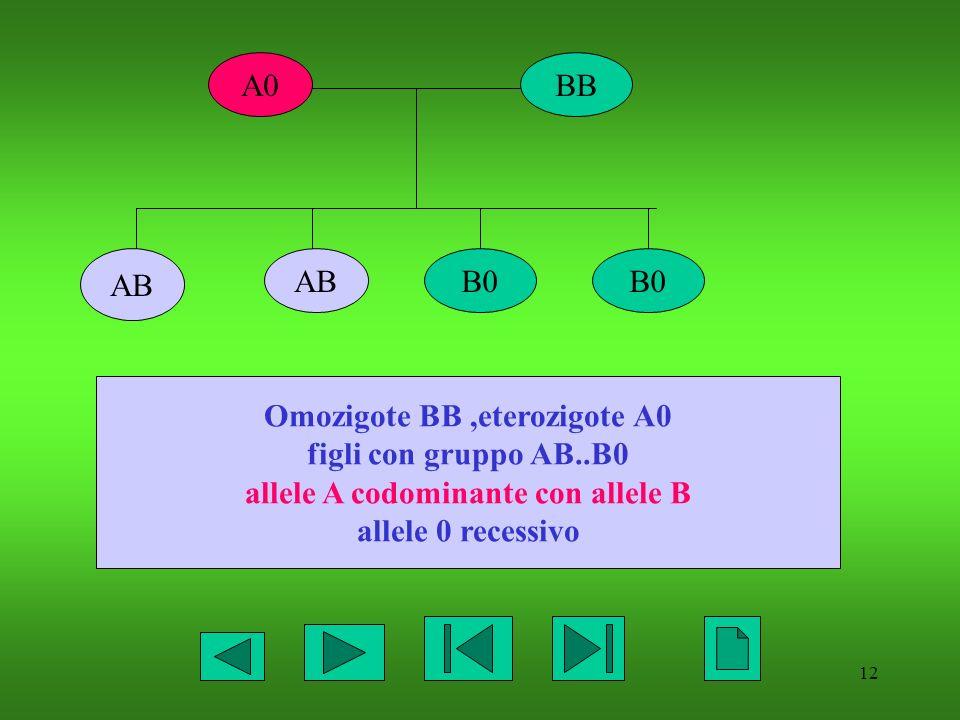 Omozigote BB ,eterozigote A0 allele A codominante con allele B
