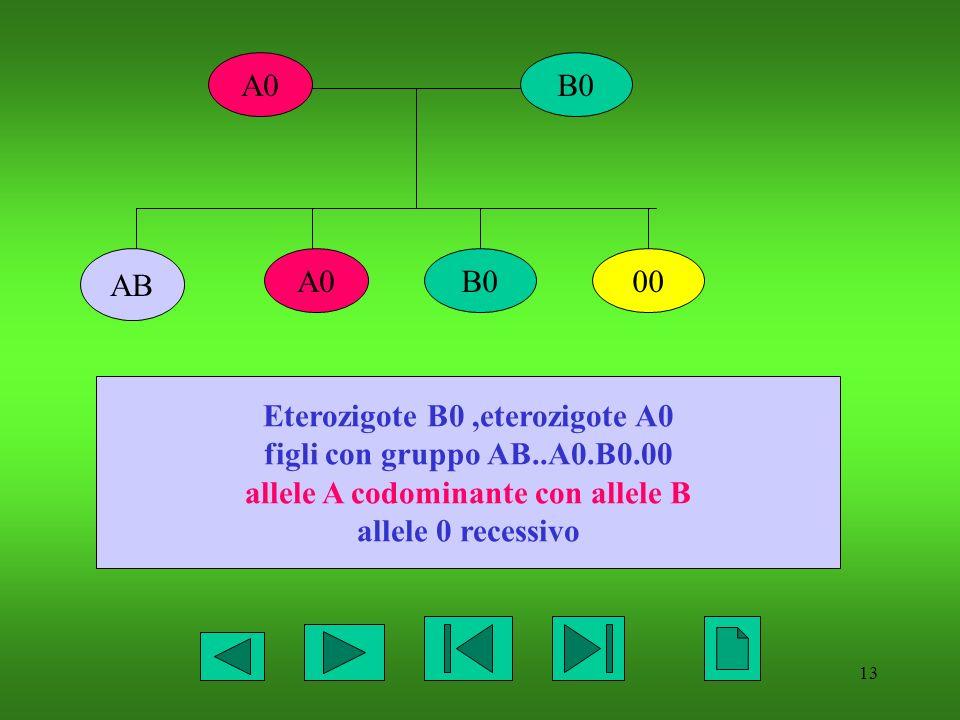 Eterozigote B0 ,eterozigote A0 allele A codominante con allele B