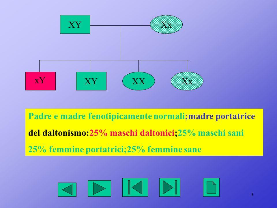 XY Xx. xY. XY. XX. Xx. Padre e madre fenotipicamente normali;madre portatrice. del daltonismo:25% maschi daltonici;25% maschi sani.