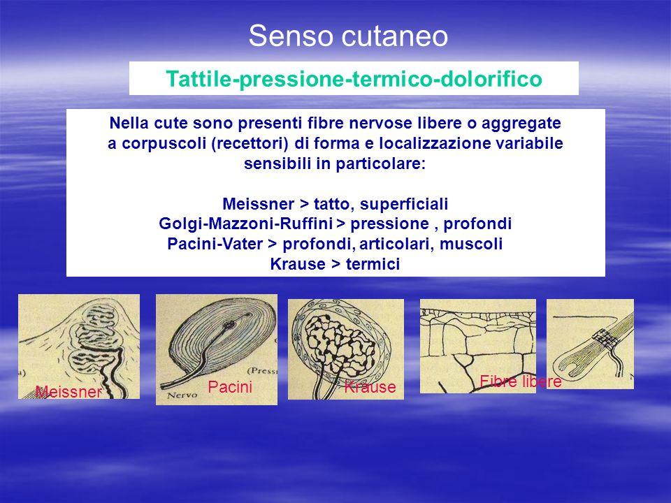 Tattile-pressione-termico-dolorifico