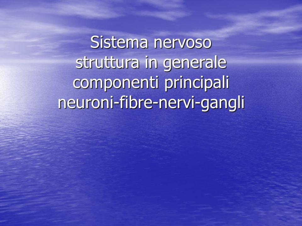 Sistema nervoso struttura in generale componenti principali neuroni-fibre-nervi-gangli