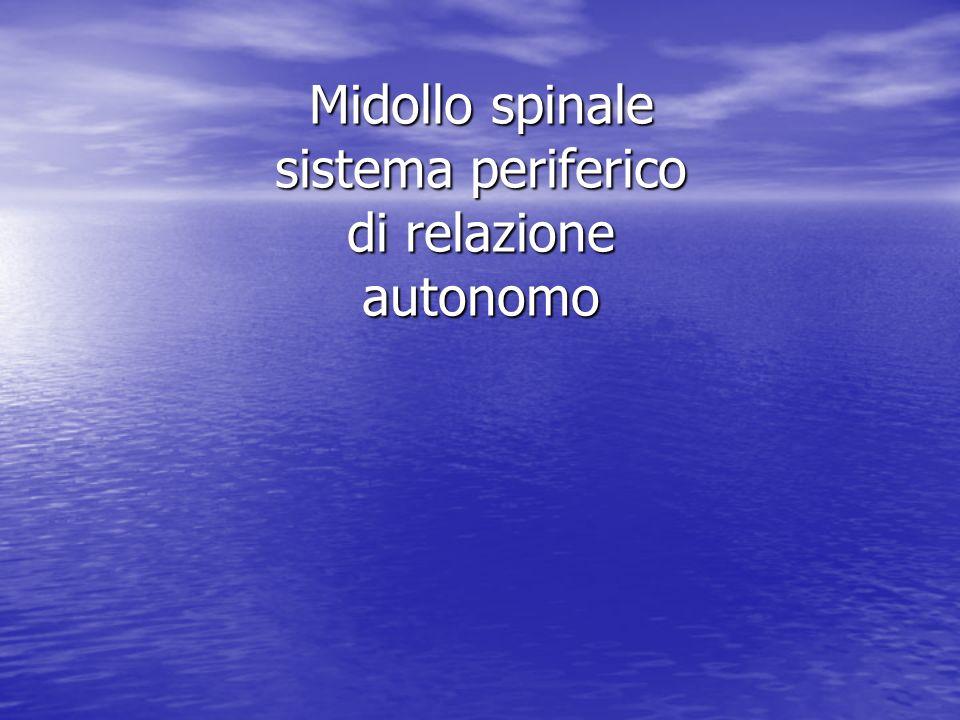 Midollo spinale sistema periferico di relazione autonomo