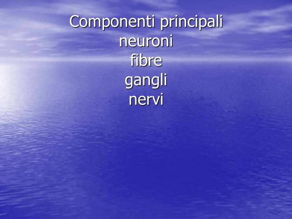 Componenti principali neuroni fibre gangli nervi