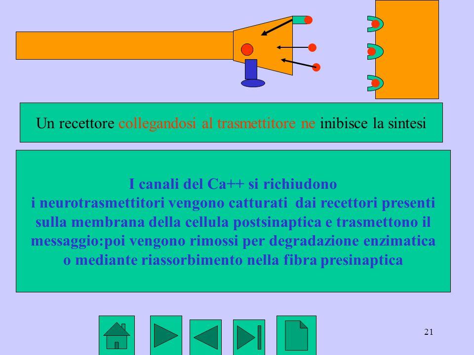 Un recettore collegandosi al trasmettitore ne inibisce la sintesi