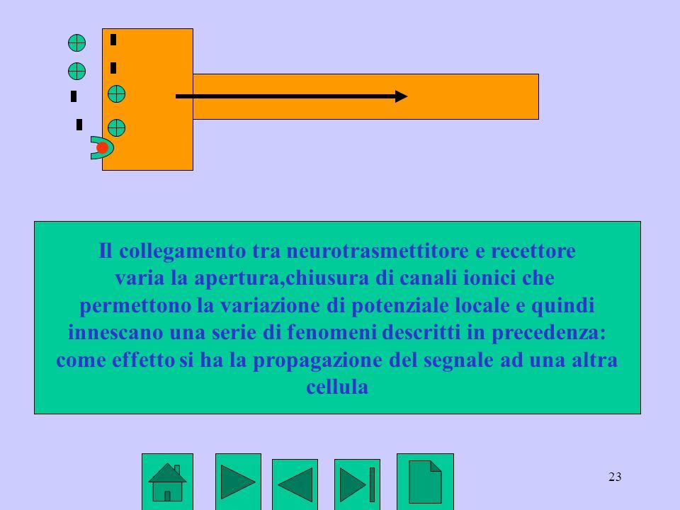 Il collegamento tra neurotrasmettitore e recettore