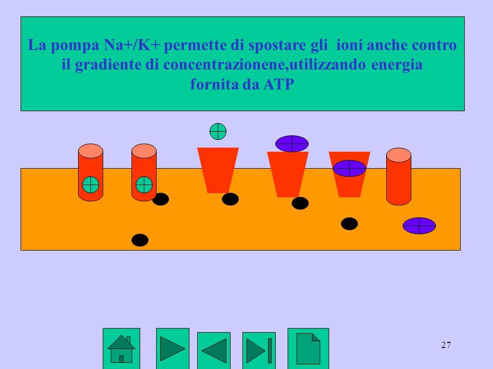 La pompa Na+/K+ permette di spostare gli ioni anche contro