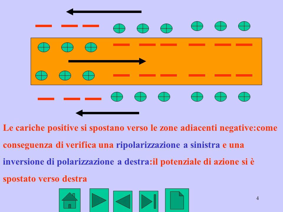 Le cariche positive si spostano verso le zone adiacenti negative:come