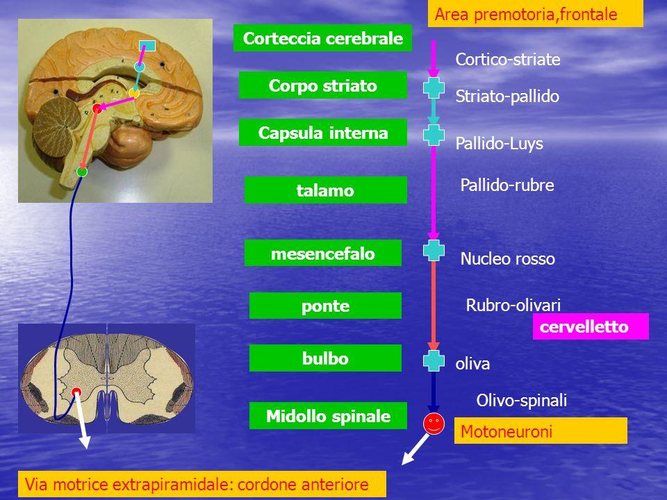 Area premotoria,frontale