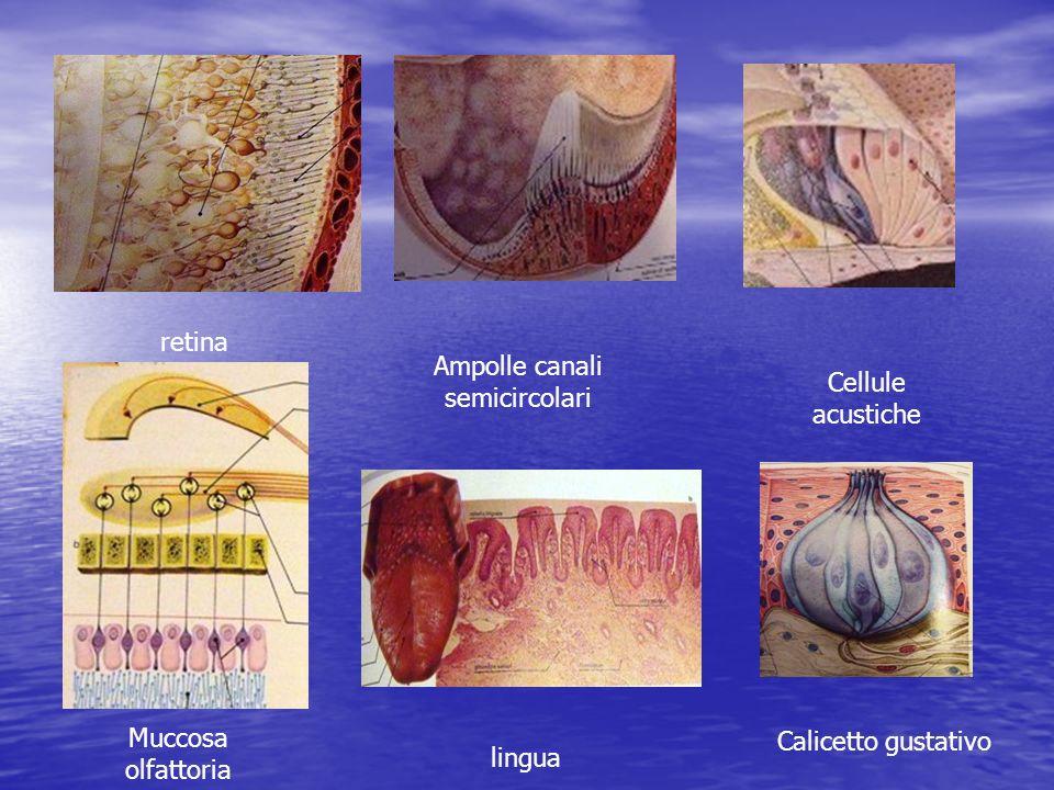 Ampolle canali semicircolari