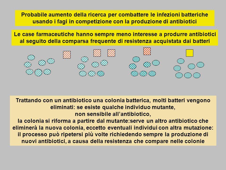 Probabile aumento della ricerca per combattere le infezioni batteriche usando i fagi in competizione con la produzione di antibiotici