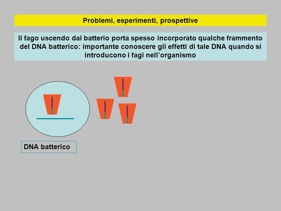 Problemi, esperimenti, prospettive