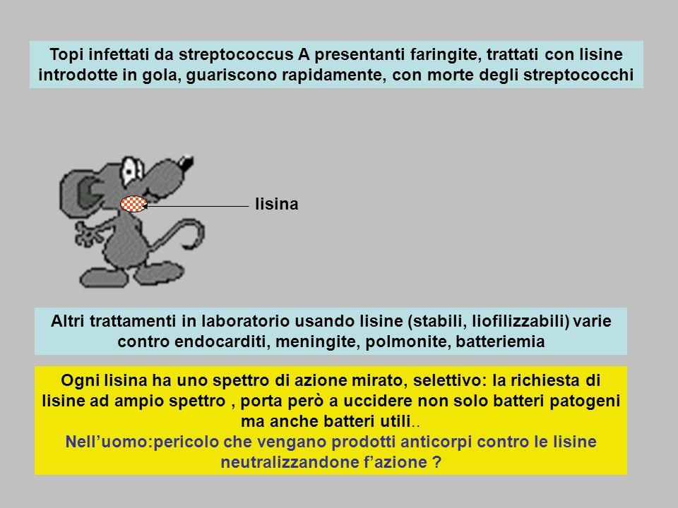 Topi infettati da streptococcus A presentanti faringite, trattati con lisine introdotte in gola, guariscono rapidamente, con morte degli streptococchi