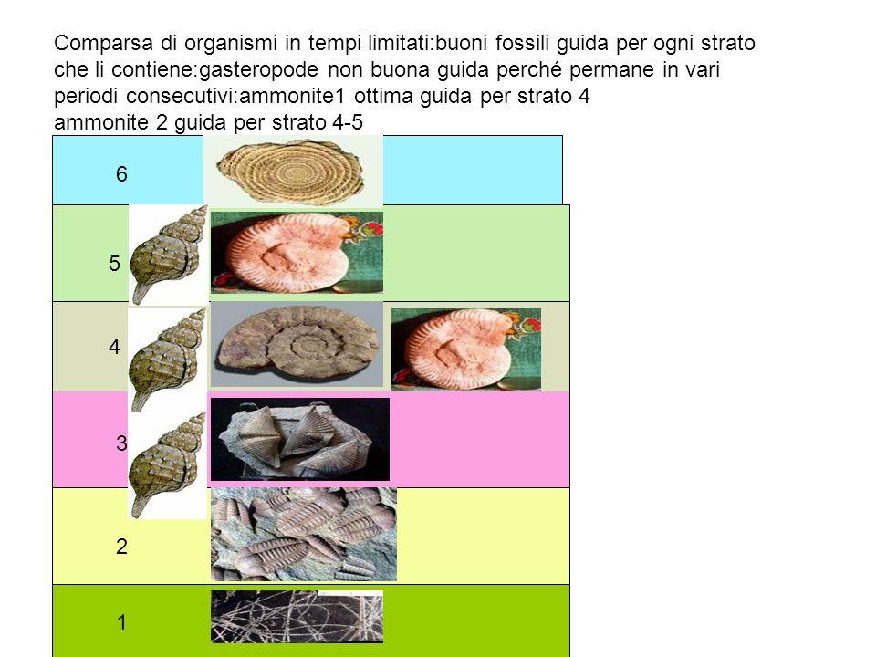 Comparsa di organismi in tempi limitati:buoni fossili guida per ogni strato che li contiene:gasteropode non buona guida perché permane in vari periodi consecutivi:ammonite1 ottima guida per strato 4 ammonite 2 guida per strato 4-5