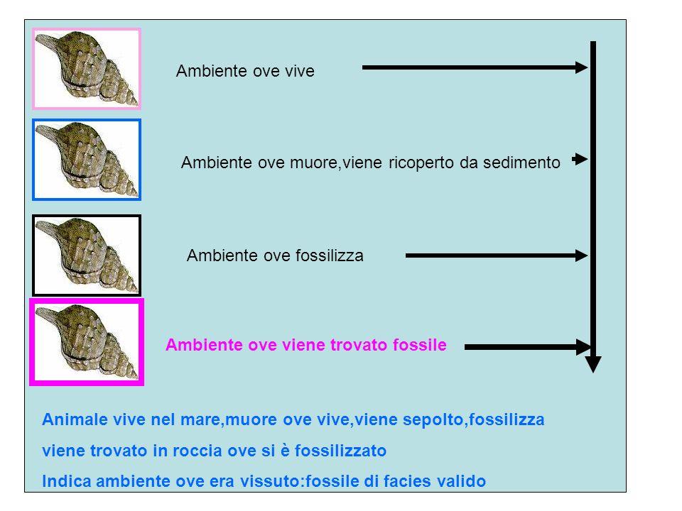 Ambiente ove vive Ambiente ove muore,viene ricoperto da sedimento. Ambiente ove fossilizza. Ambiente ove viene trovato fossile.