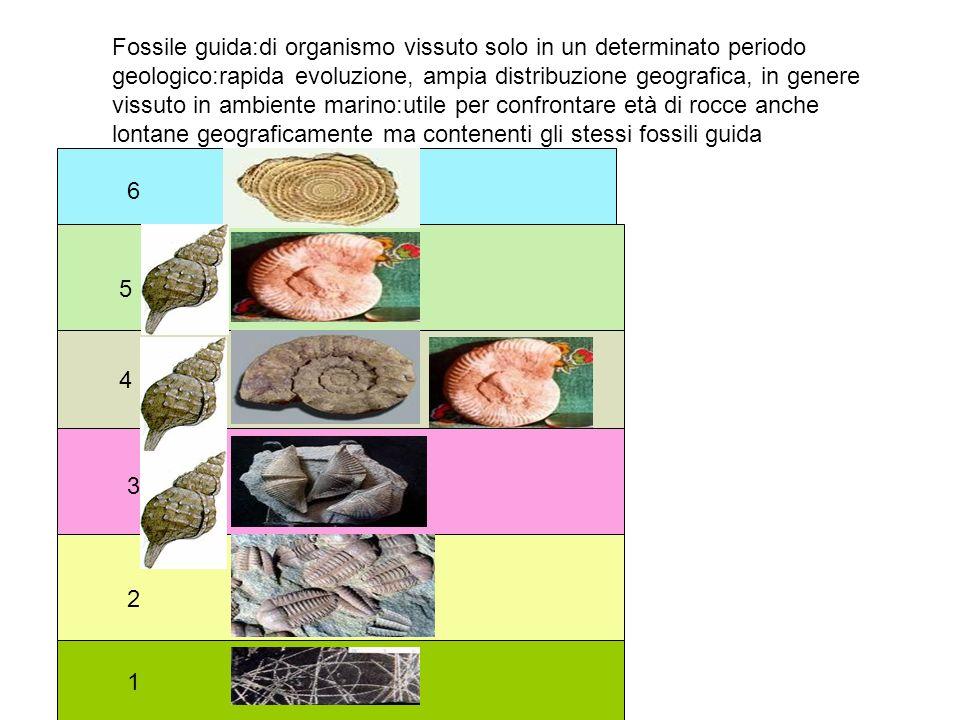 Fossile guida:di organismo vissuto solo in un determinato periodo geologico:rapida evoluzione, ampia distribuzione geografica, in genere vissuto in ambiente marino:utile per confrontare età di rocce anche lontane geograficamente ma contenenti gli stessi fossili guida