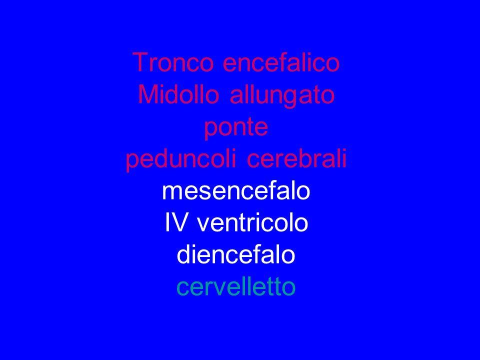 Tronco encefalico Midollo allungato ponte peduncoli cerebrali mesencefalo IV ventricolo diencefalo cervelletto