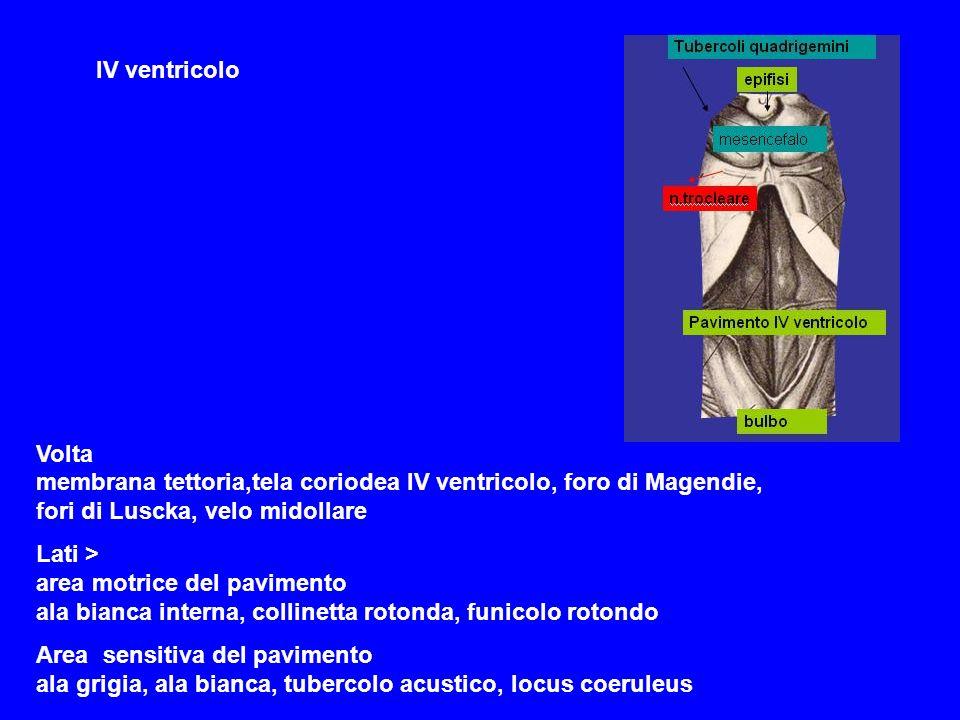 IV ventricolo Volta membrana tettoria,tela coriodea IV ventricolo, foro di Magendie, fori di Luscka, velo midollare.