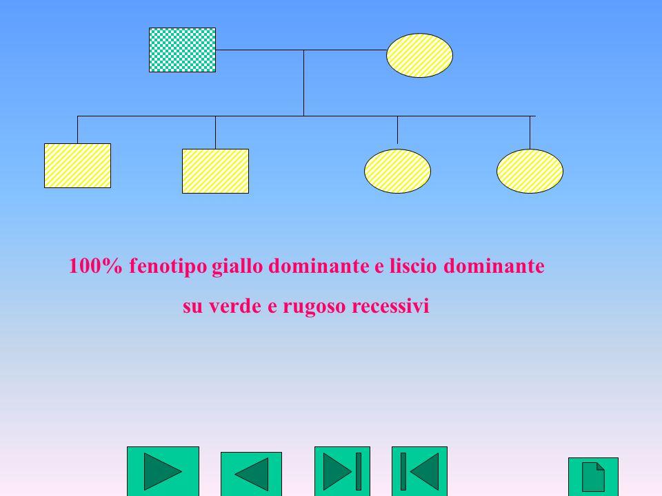 100% fenotipo giallo dominante e liscio dominante