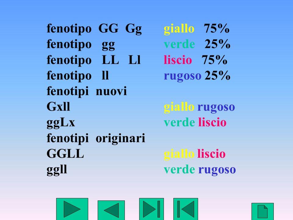 fenotipo GG Gg giallo 75% fenotipo gg verde 25% fenotipo LL Ll liscio 75% fenotipo ll rugoso 25%