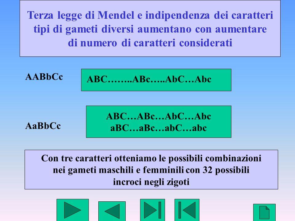 Terza legge di Mendel e indipendenza dei caratteri