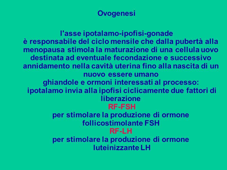 Ovogenesi