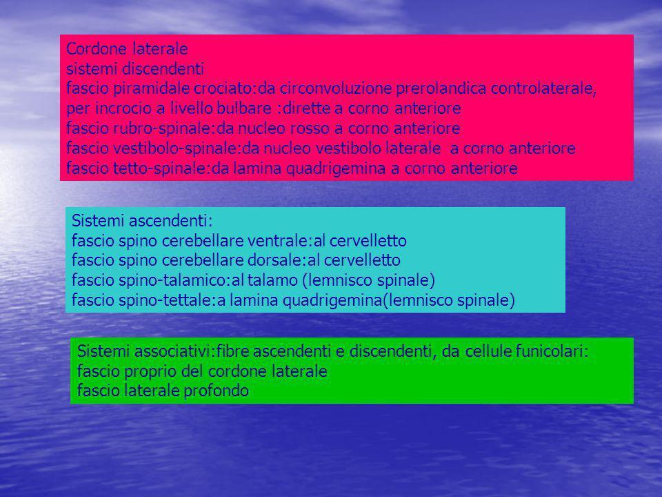 Cordone laterale sistemi discendenti fascio piramidale crociato:da circonvoluzione prerolandica controlaterale, per incrocio a livello bulbare :dirette a corno anteriore fascio rubro-spinale:da nucleo rosso a corno anteriore fascio vestibolo-spinale:da nucleo vestibolo laterale a corno anteriore fascio tetto-spinale:da lamina quadrigemina a corno anteriore