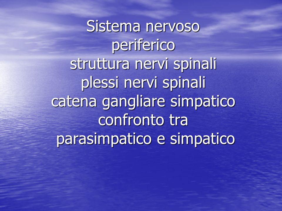Sistema nervoso periferico struttura nervi spinali plessi nervi spinali catena gangliare simpatico confronto tra parasimpatico e simpatico