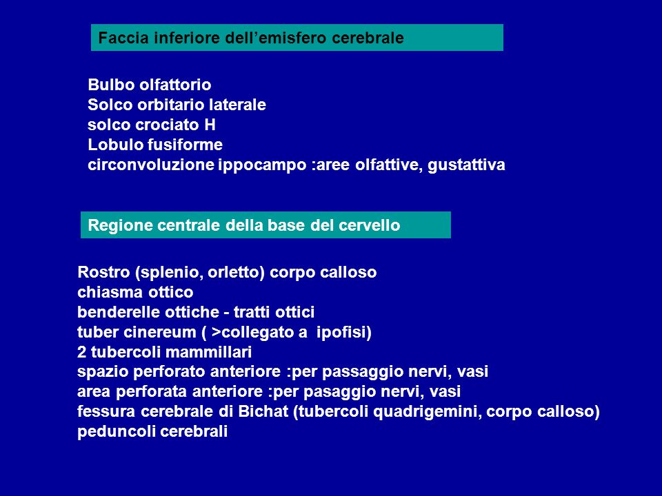Faccia inferiore dell'emisfero cerebrale