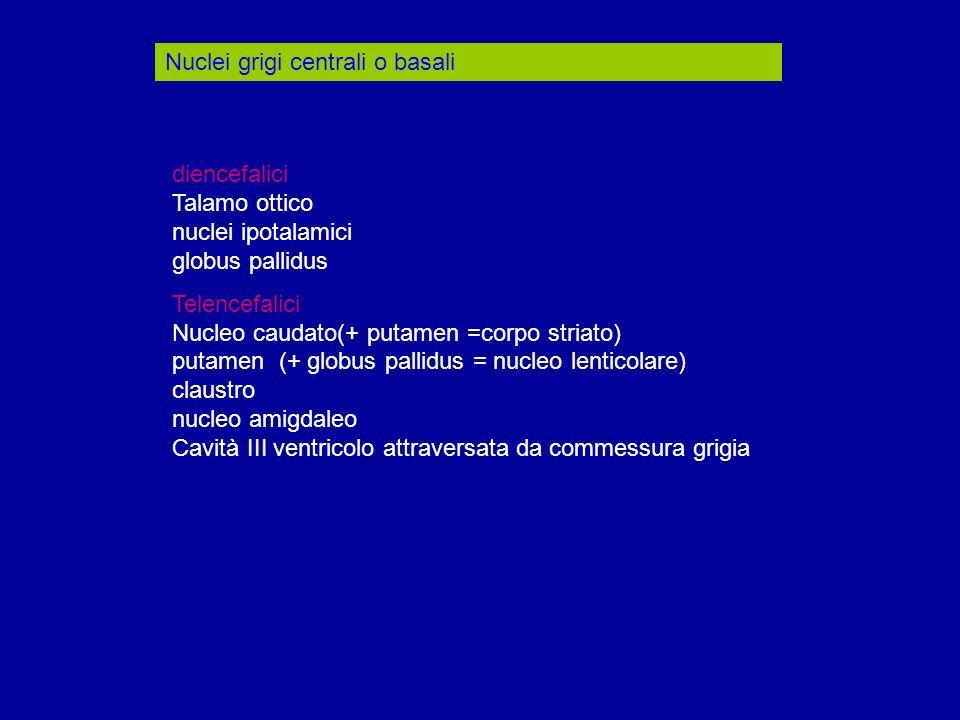 Nuclei grigi centrali o basali