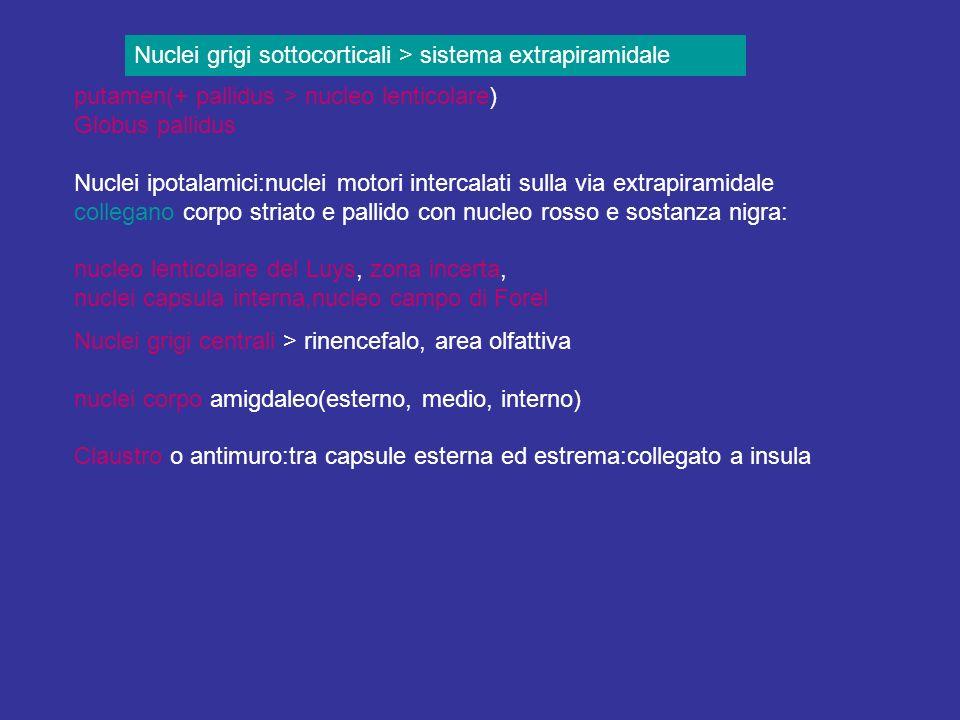 Nuclei grigi sottocorticali > sistema extrapiramidale