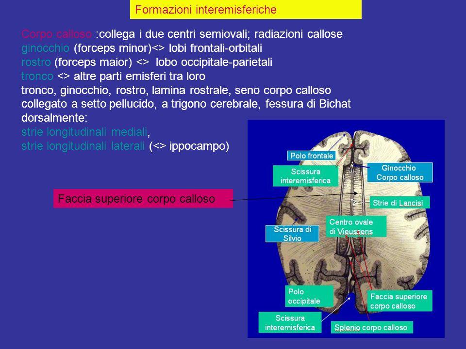 Formazioni interemisferiche